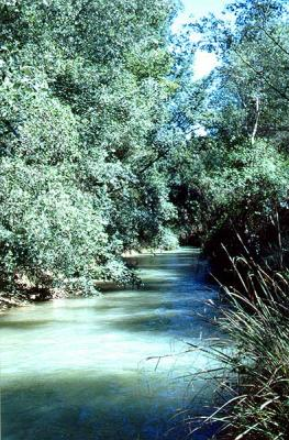 Contaminación del río Segura