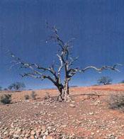 La  desertización en Murcia